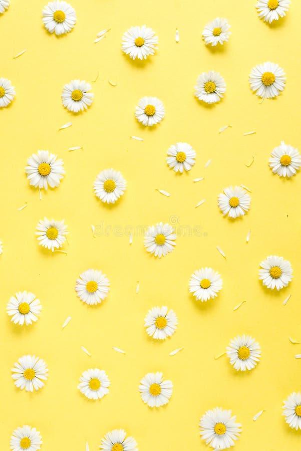 Florece la composici?n Modelo hecho de las manzanillas, p?talos en fondo amarillo en colores pastel Primavera, concepto del veran foto de archivo libre de regalías