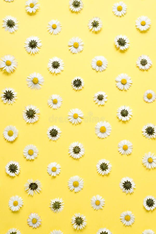 Florece la composici?n Modelo hecho de las manzanillas, p?talos en fondo amarillo en colores pastel Primavera, concepto del veran fotografía de archivo libre de regalías