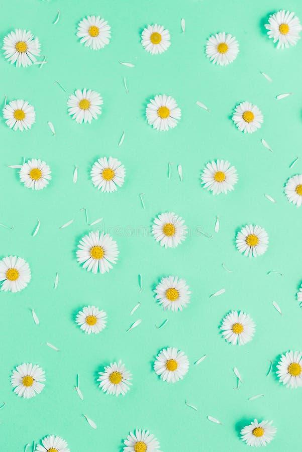 Florece la composici?n Modelo hecho de las manzanillas, p?talos en fondo verde en colores pastel Primavera, concepto del verano imagenes de archivo