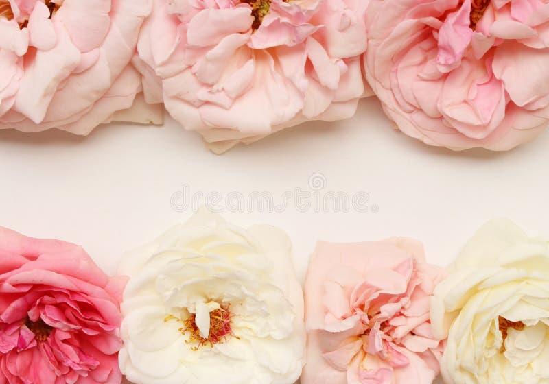 Florece la composici?n Pétalos de la flor de Rose en el fondo blanco D?a del ` s de la tarjeta del d?a de San Valent?n, concepto  fotografía de archivo