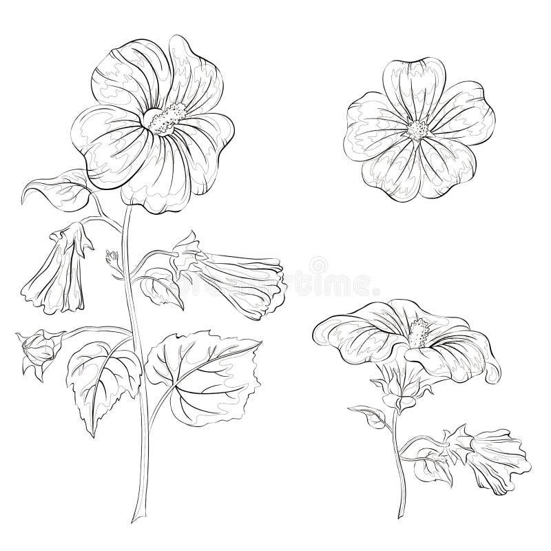 Florece la malva, contornos libre illustration