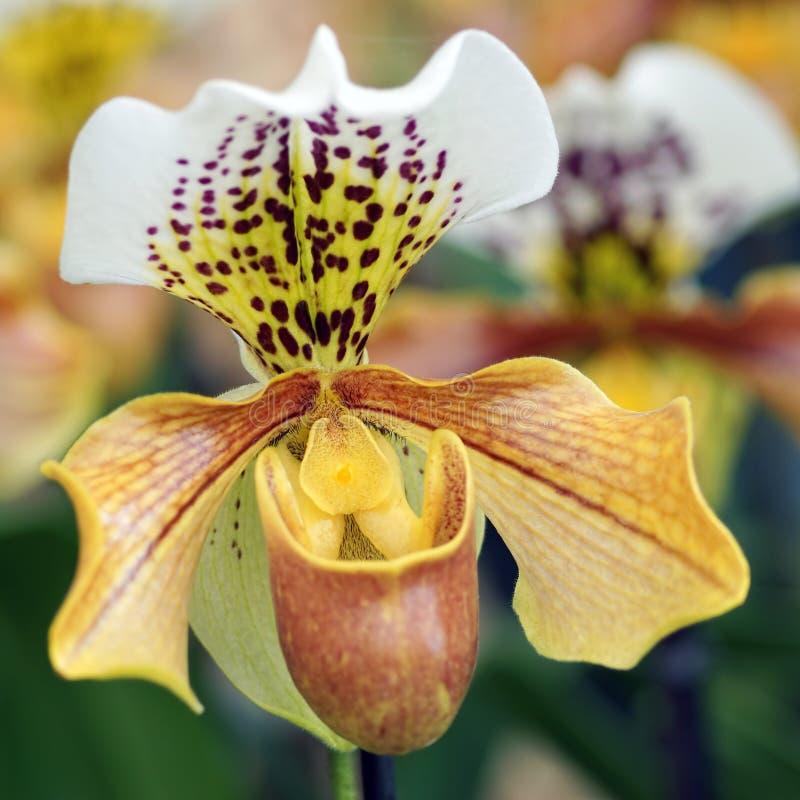 Florece la profundidad baja de la orquídea del campo fotografía de archivo libre de regalías