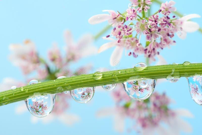 Florece la reflexión en agua-gota imagenes de archivo