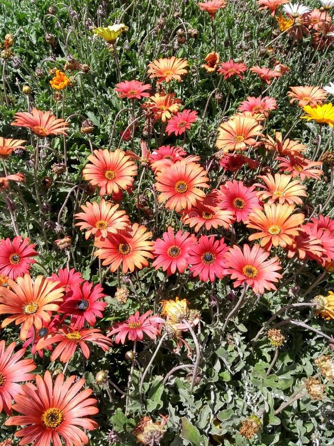 Florece muchos colores imagen de archivo