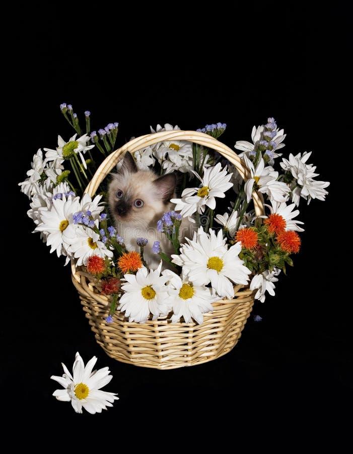 Florece w/cat aislado cesta fotos de archivo