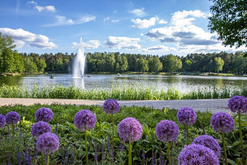 Florecimiento Campo con las flores florecientes delante del lago Druskininkai Druskonis foto de archivo libre de regalías
