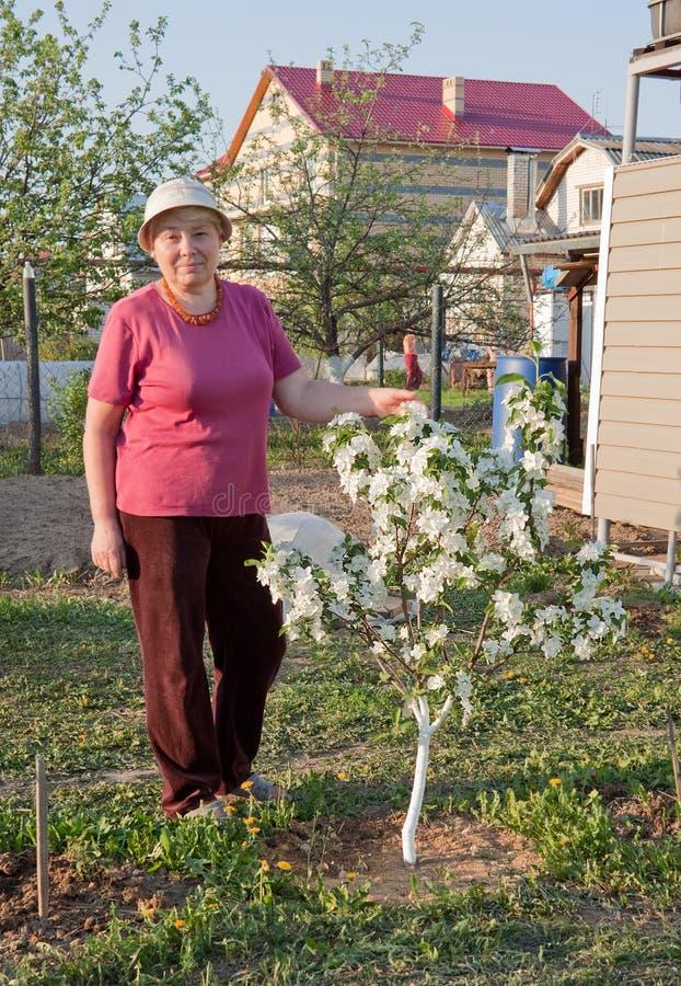 Florecimiento de un manzana rbol enano imagen de archivo for Enano jardin