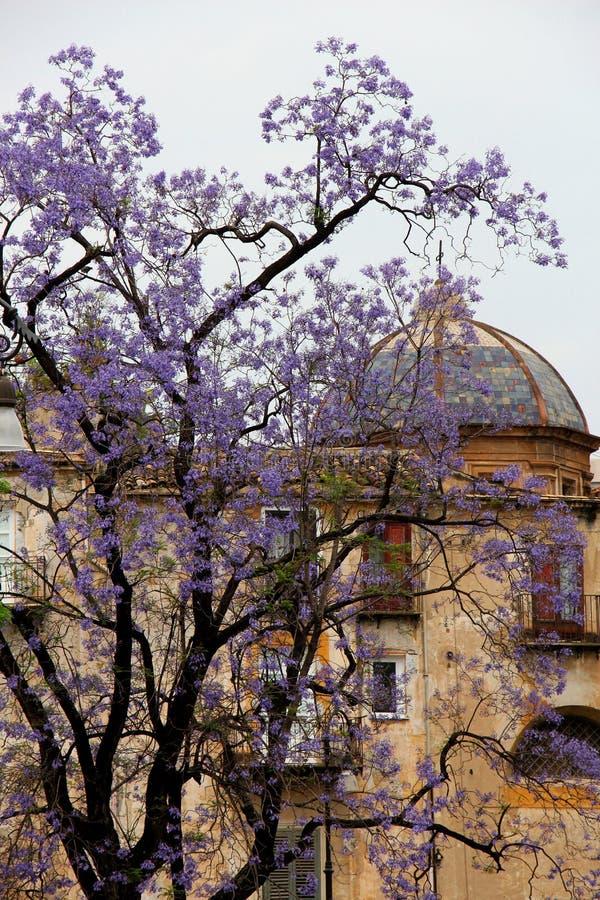 Florecimiento magnífico de un árbol, lila fotos de archivo