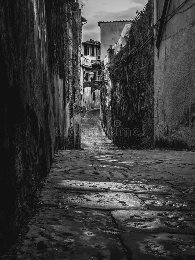 Florence - Beautiful classical and narrow street with vegetation in Florence, Italy. stock photography