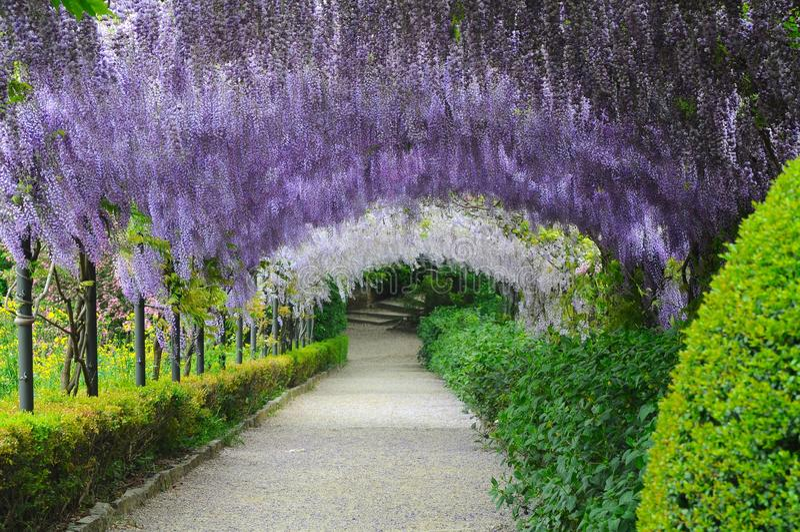 Florence giardino bardini boboli stock photo image of for Giardino firenze