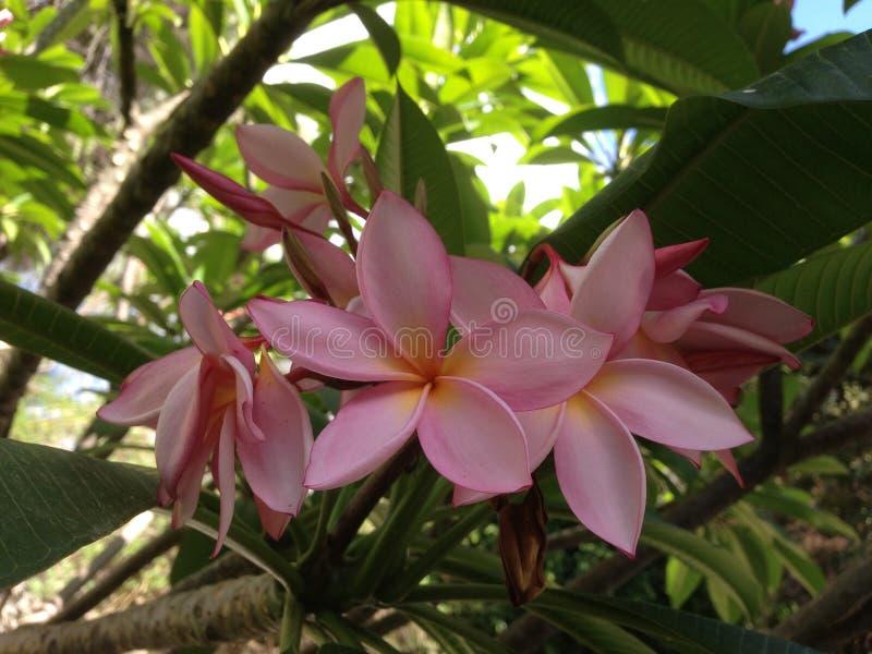 Florer tropical hermoso imagen de archivo libre de regalías