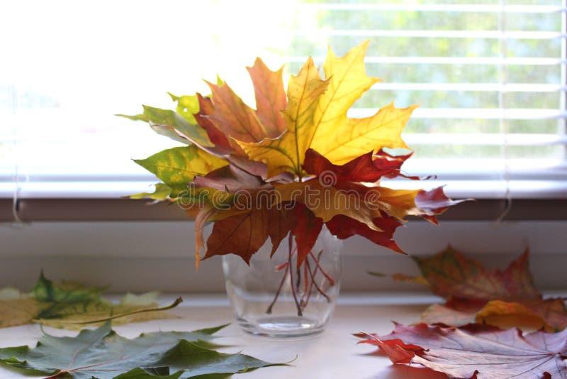 Florero con las hojas fotografía de archivo libre de regalías