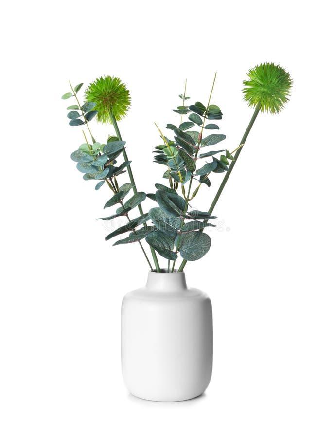 Florero con las plantas verdes en el fondo blanco imagen de archivo