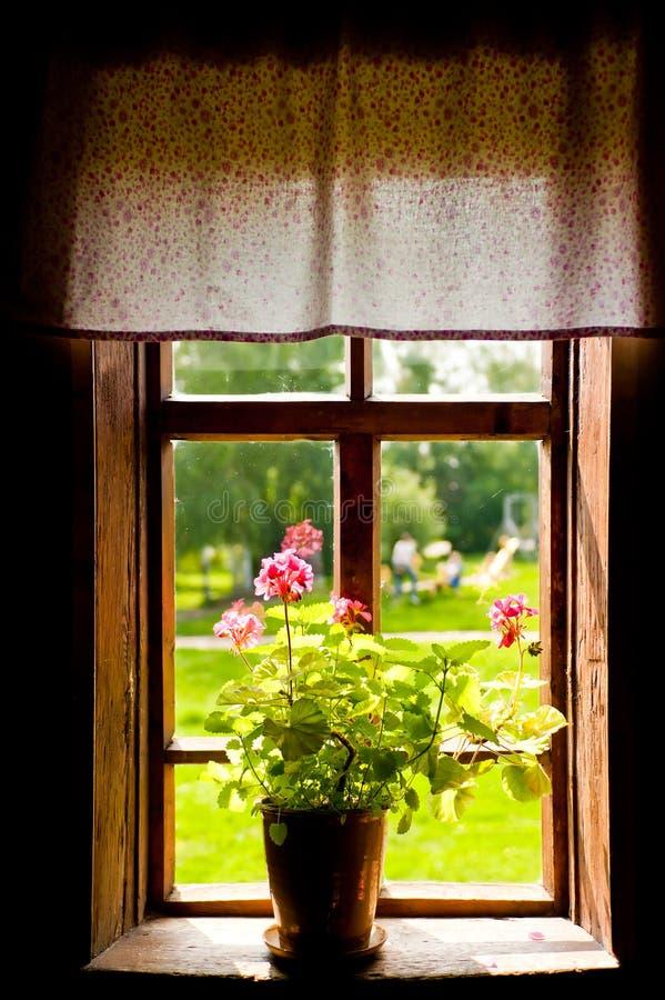Florero con una flor en la casa de campo del windowsill fotografía de archivo libre de regalías