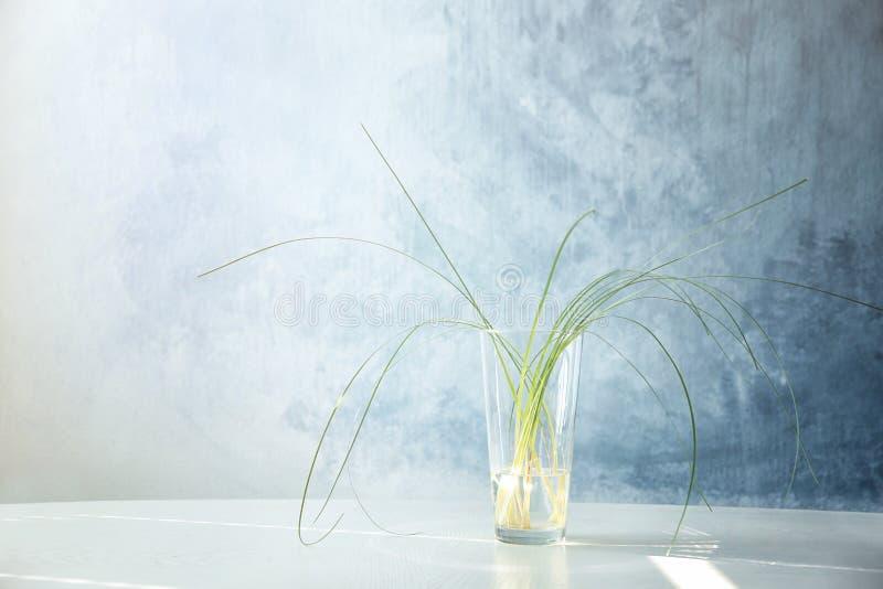 Florero de cristal con las plantas verdes imagenes de archivo