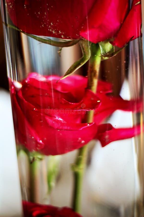 Florero de cristal con las rosas rojas imágenes de archivo libres de regalías