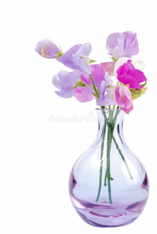 Florero de flores del guisante dulce imagenes de archivo