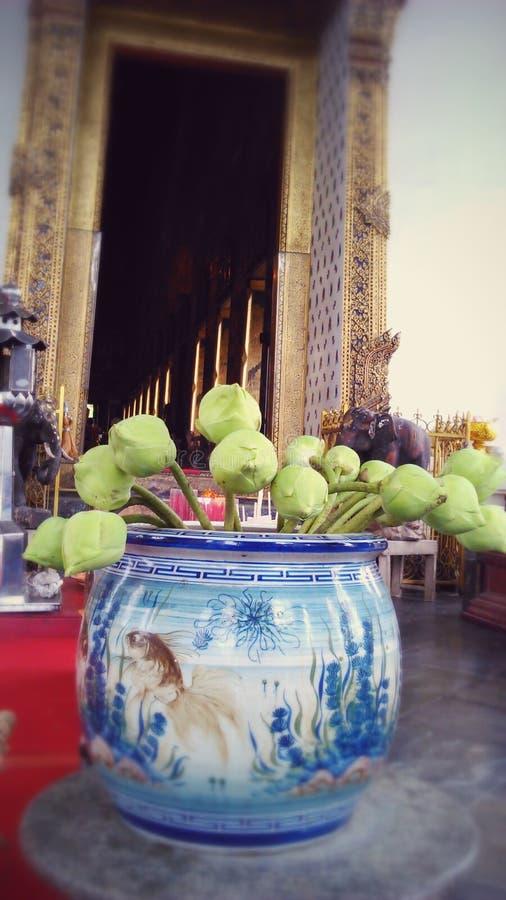Florero de Lotus sagrado en la puerta del templo fotos de archivo libres de regalías