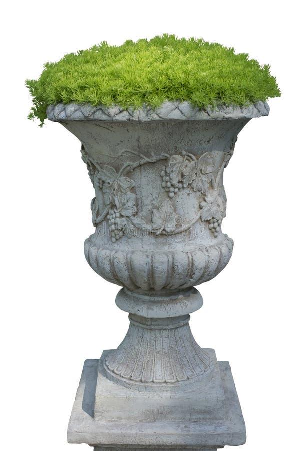 Florero de piedra, cama de flor con las plantas verdes frescas Aislado en el fondo blanco imagenes de archivo