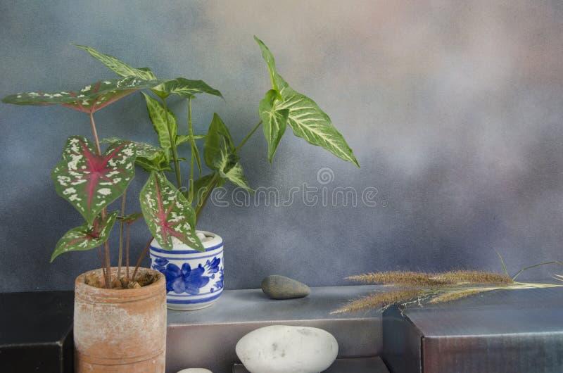 Florero hermoso de la hoja con el fondo coloreado fotografía de archivo libre de regalías