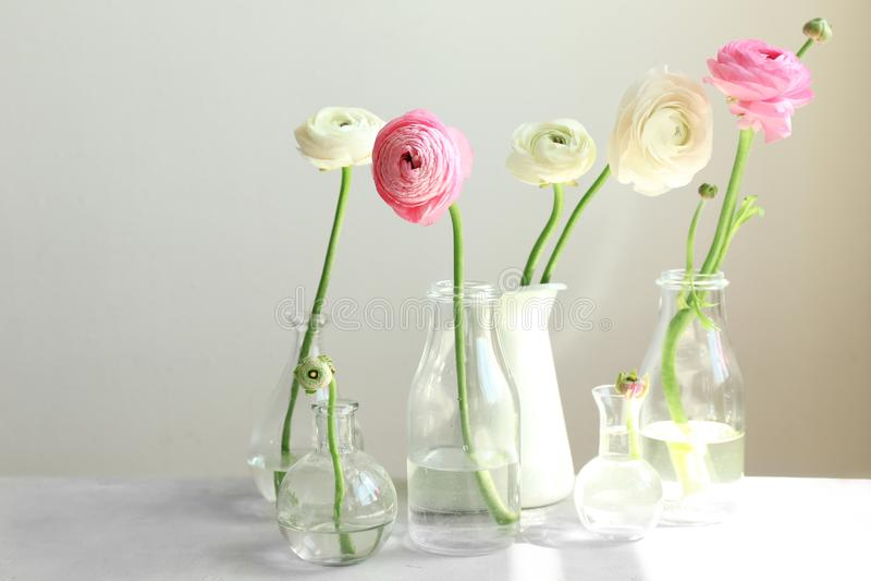 Floreros de cristal con las flores frescas hermosas del ranúnculo foto de archivo libre de regalías