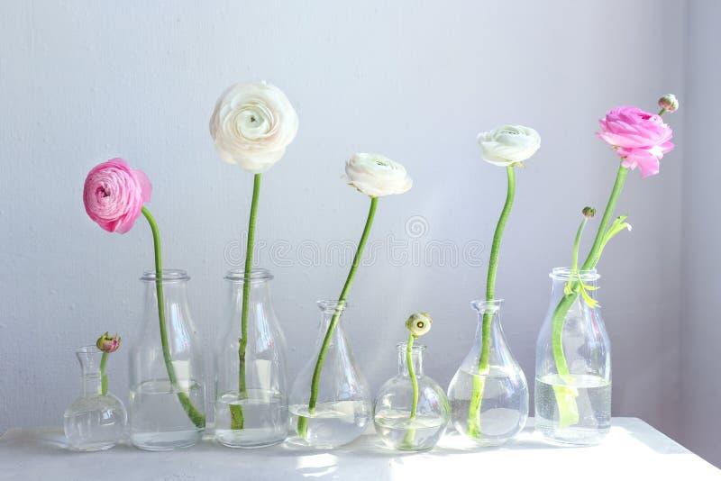Floreros de cristal con las flores frescas hermosas del ranúnculo imágenes de archivo libres de regalías