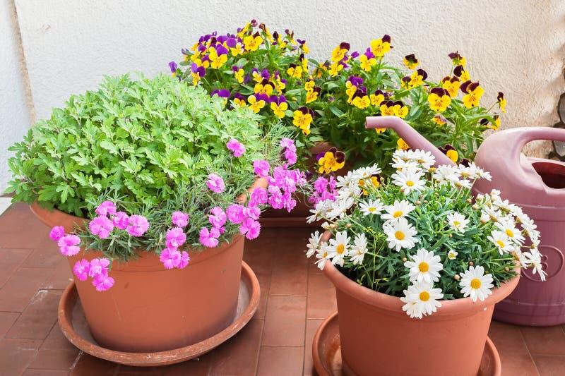 Floreros De Flores Crecidas En La Terraza De Un Apartamento