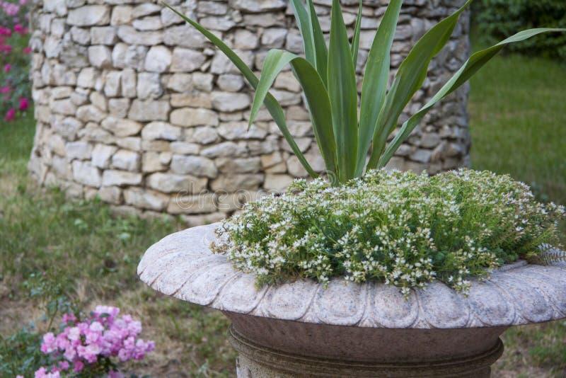 Floreros de mármol del césped con las flores para cultivar un huerto imagenes de archivo