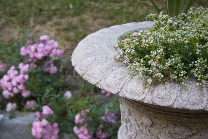Floreros de mármol del césped con las flores para cultivar un huerto foto de archivo