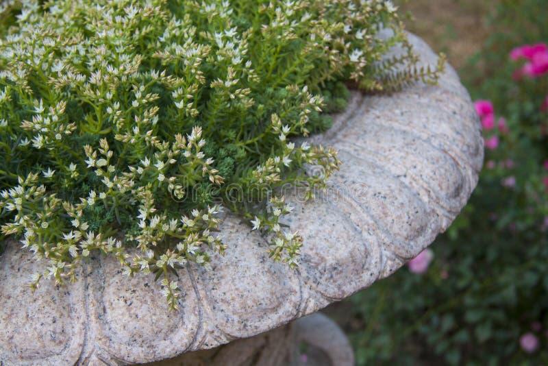 Floreros de mármol del césped con las pequeñas flores para cultivar un huerto imagen de archivo