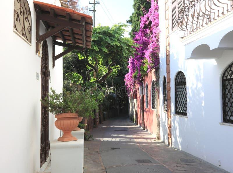 Floresça a aleia na ilha de Capri em Itália Paisagem bonita do verão foto de stock royalty free