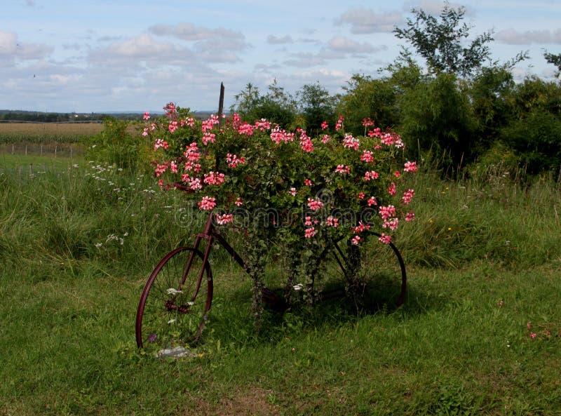 Floresça a bicicleta coberta em Pouilly-Sur-Loire, Borgonha, França imagem de stock royalty free