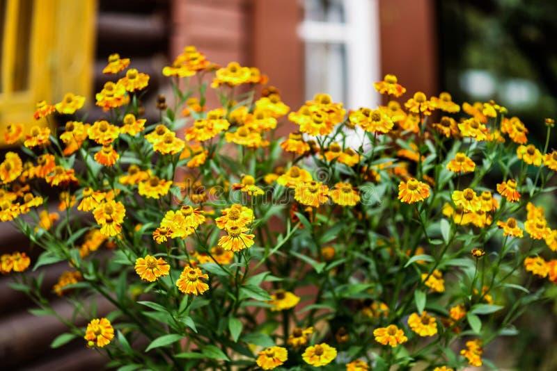 Floresça a caixa com as flores do gerânio no patamar da casa da casa de campo fotografia de stock