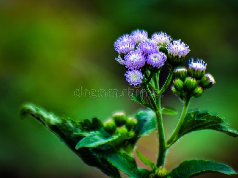 Floresça com branco e viole fotos de stock