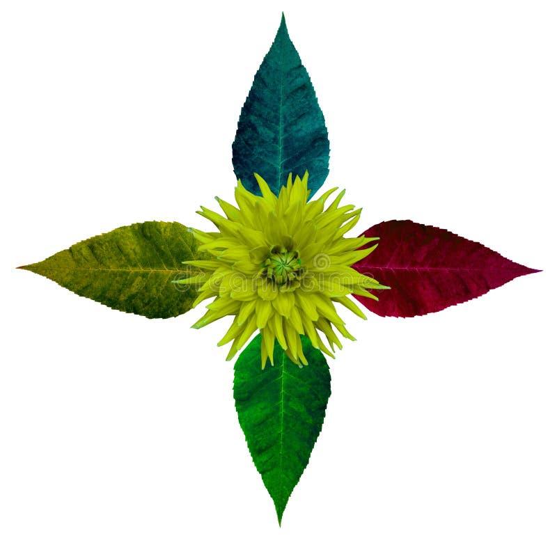 Floresça a composição da dália e da folha da árvore no fundo isolado branco com trajeto de grampeamento foto de stock
