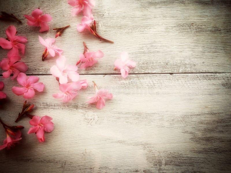 floresça em de madeira no foco macio com tom do vintage fotografia de stock