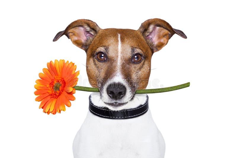 Floresça o cão fotografia de stock