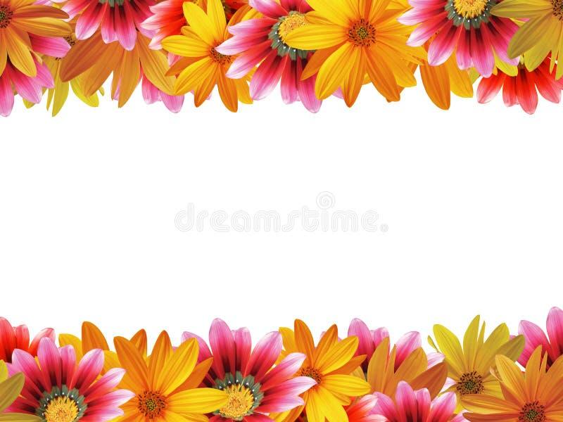 Floresça o frame da flor fotografia de stock royalty free
