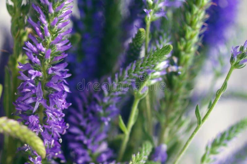 Floresça o fundo delicado com as flores selvagens lilás do verão imagem de stock