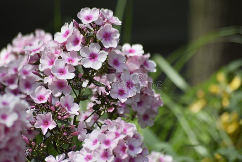 Floresça o jardim zoológico checo ensolarado roxo da árvore da beleza do tempo de lazer do verde do verão da natureza das flores fotos de stock royalty free
