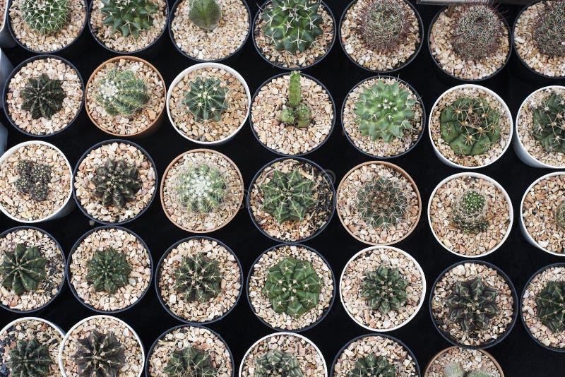 Floresça o mercado com o cacto em pasta da variedade do lote, vista superior fotos de stock
