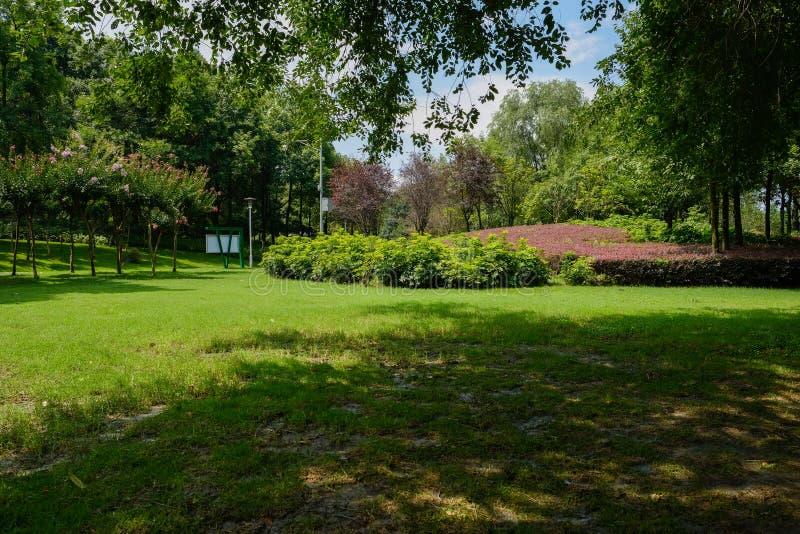 Floresça o terraço e o gramado protegido na tarde ensolarada do verão fotografia de stock royalty free