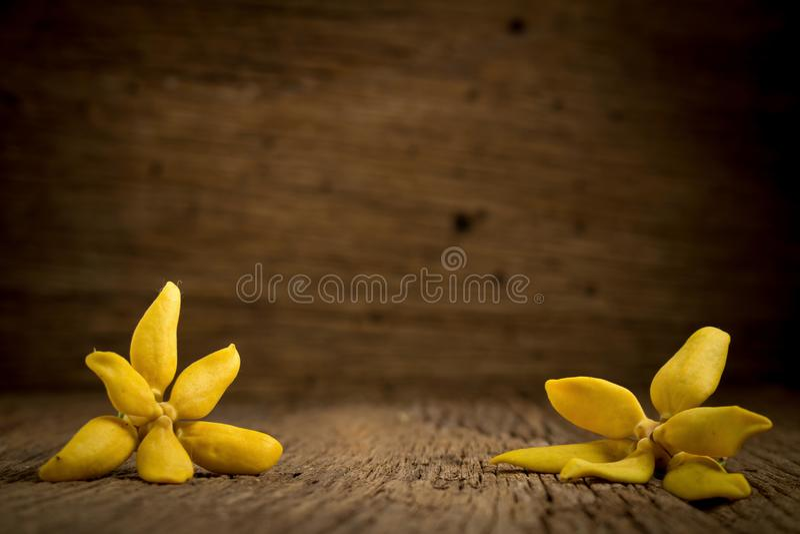 floresça o ylang-ylang de escalada, ilang-ilang de escalada, manorangini, fotografia de stock