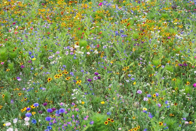 Floresça plantas de florescência selvagens do parque do campo da flor do prado várias fotos de stock royalty free