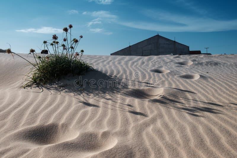 Floresça resistindo o deserto com uma casa abandonada no fundo imagens de stock