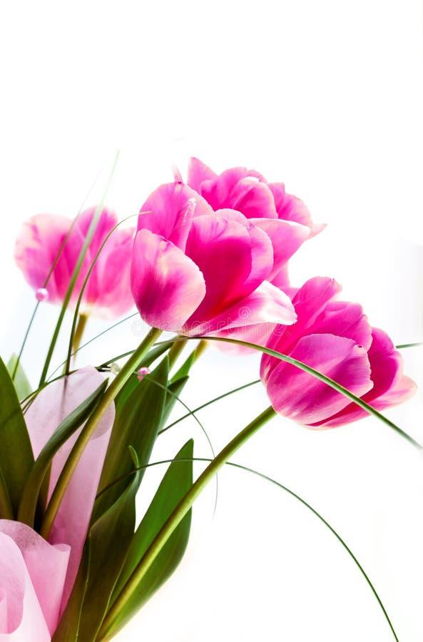 Floresça tulips foto de stock