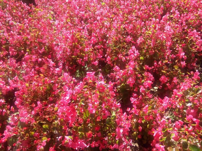 Flores цветет jardin flores стоковое изображение