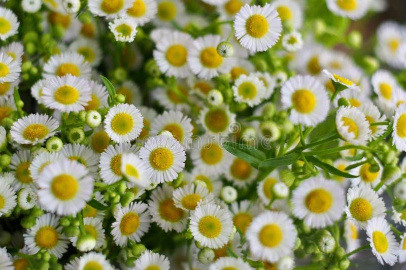 Download Flores foto de archivo. Imagen de sepa, mirada, qué - 100533928