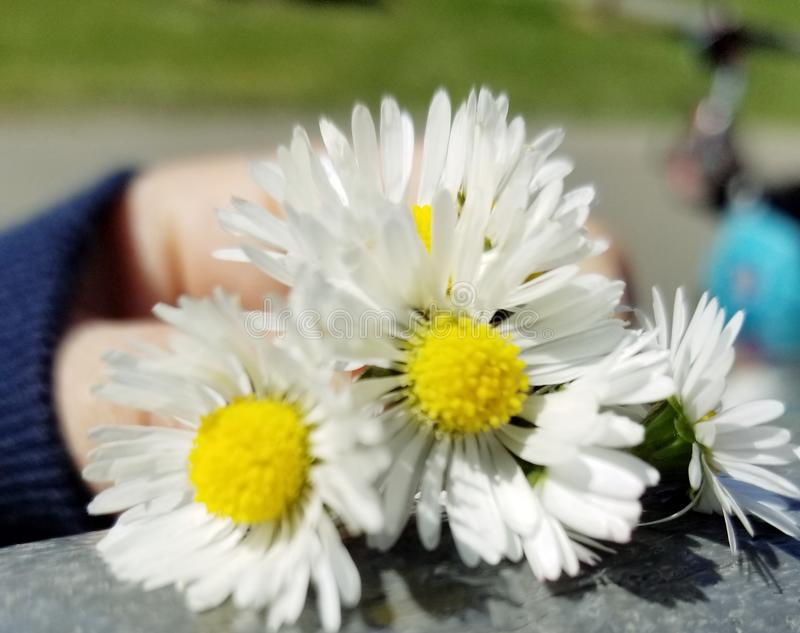 flores fotografia stock