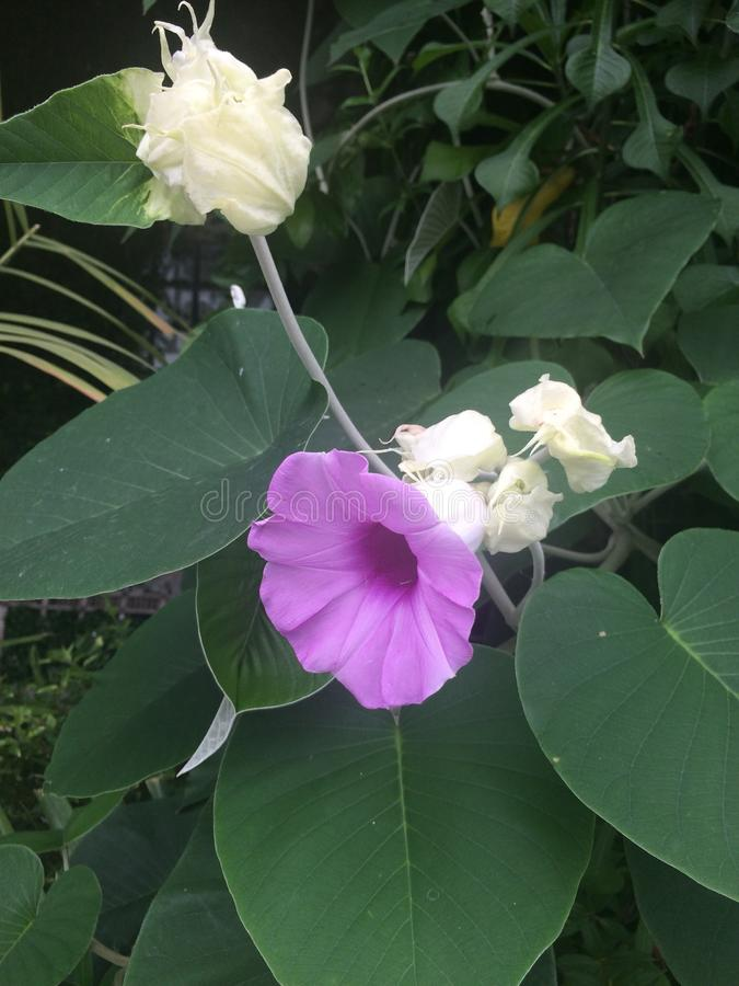 Flores foto de stock